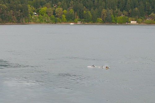 Orques depuis le ferry