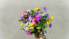 Random Flowers (PhotoRooki3) Tags: flowers plants colors colorful alpha 77