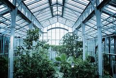 (Sameli) Tags: winter suomi finland garden helsinki 1893 talvipuutarha