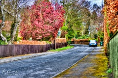 Countryside Streets (Fatima Hussain) Tags: street flowers english colors yellow canon newcastle photography countryside spring photographers pakistani hdr fatima newcastleupontyne hussain wylam 600d fatimahussain