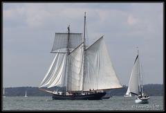 Wylde Swan (leightonian) Tags: uk island boat sailing ship unitedkingdom isleofwight solent gb tallship isle schooner cowes wight iow