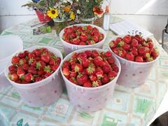 Berries, Berries, Berries. (geevee41) Tags: red summer fruit strawberries prairies