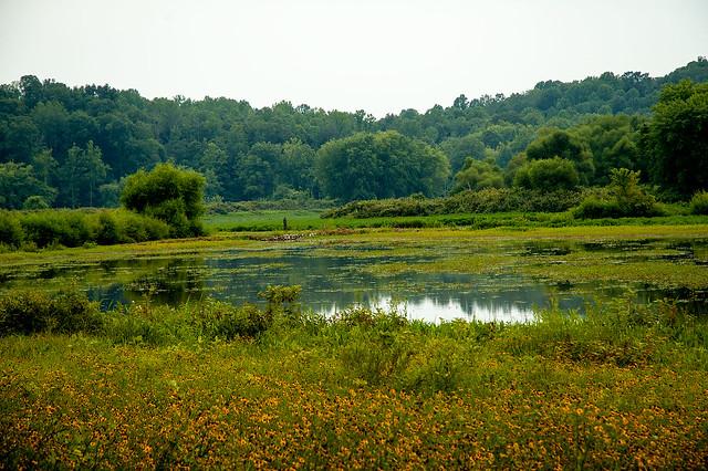 Stillwater Marsh - August 2013