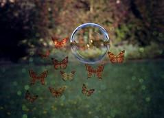 """Oysa iyi biliyorum ki dnya, (E b r i n i s a N) Tags: world reflection green butterfly ali bubble evi ayil kovulmularn kellebek"