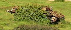 Centurion recovery , Tyneham Tanks (Hammerhead27) Tags: uk trees overgrown grass army bush junk tank military rusty foliage camouflage dorset target vehicle fighting wreck britisharmy range armour centurion tynehamtanks