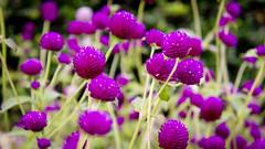 Flores en Central Park