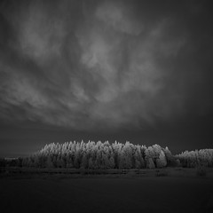 Jamtlandsnatt (c e d e r) Tags: trees night clouds sweden infrared jmtland
