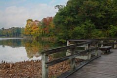 Welcoming Autumn (player_pleasure) Tags: autumn trees chicago fall water creek observation suburbs pathway