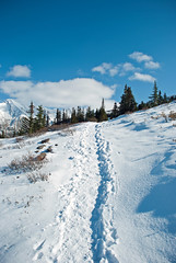Climbing up Parker Ridge (aitramah) Tags: blue winter white snow canada cold hiking path bluesky alberta banff