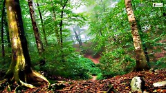 Sub tropical forest wallpaper (Infoway LLC - Website Development Company) Tags: wallpaper beautiful wonderful nice superb awesome images exotic hd illustrator incredible breathtaking classy bambooforest mindblowing dryforest amazonrainforest greenforest winterforest woodforest junglewallpaper sunsetwallpaper islandwallpaper summerforest responsivewebsitedesign subtropicalforestwallpaper waterfallintropicalforest responsivewebdesigncompany mountainsnowforest yellowredautumnforest tropicaldesertisland tropicalforestwithriver