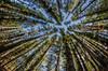 los pinos del Cerro de la Gloria (.el Ryan.) Tags: naturaleza primavera argentina nikon paisaje colores fisheye mendoza popular 8mm fiaca rokinon mauricioryan mprimir