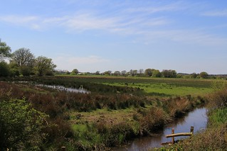 Pulborough Brooks RSPB West Sussex (8)