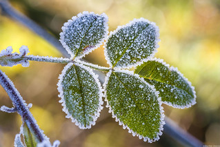 Frozen impressions 4
