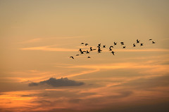 Sunset view from Sunset pier (Ale Berger) Tags: ocean trip blue sunset vacation sky orange cloud sun color bird silhouette night keys landscape golden lowlight nikon december florida keywest southflorida d600 pwpartlycloudy
