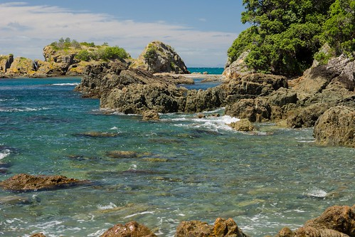 Thumbnail from Tiritiri Matangi Island