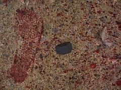 The Color Blood - From the Secret Colour Samples of the Warrior ~ Die Farbe Blut - Aus den geheimen Farbproben des Kriegers (hedbavny) Tags: vienna wien red color colour rot sunglasses rouge spur austria sterreich blood pattern innenhof feather trace krieg mq sample warrior blob rood rosso stein farbe tone muster imprint bunt ton fleck sonnenbrille hof csi profil museumsquartier blut boden krieger beispiel procrustes feder farbprobe weis spritzer friedemann crimesceneinvestigation gehsteig blutspur rotton farbton schuhabdruck beweise indizien fusabdruck bluttat blutspritzer identifizierung prokrustes hedbavny ingridhedbavny