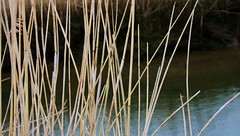 Reed (Phillloyd fotographie) Tags: brown reed water yellow culvert cley sluicegate