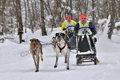 _DSC8459 copia (JoanEnric) Tags: dog musher mushing sled sleddog traineau valgaudemar valgaude valgaudetraineau