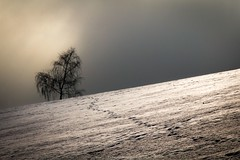 Trace (bernd obervossbeck) Tags: schnee winter snow tree spur treesilhouette trace minimalistic baum sauerland minimalistisch baumsilhouette minimalisticlandscape minimalistischelandschaft