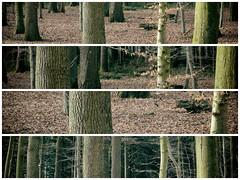 Tree study (Marc Gommans) Tags: trees winter abstract texture dutch lines woods outdoor leafs limburg em1 bossen zd photoborder mmf3 marcgommans landgoedgeijsteren zuiko1454mk1 olympusomd