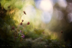 life, unfolding (pixiespark) Tags: sunlight nature spring natur ferns farne frhling sonnenlicht
