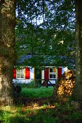 DSC02106 (jjchien) Tags: park netherlands sony arnhem national fe za hoge f4 veluwe oss the  2470mm    ilce7m2