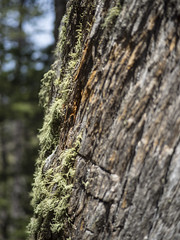 21 May 16 Moss Collector, Too (ethanbeute) Tags: forest colorado hiking hike coloradosprings hikingtrail pikenationalforest greenmountainfalls forested foresttrail catamounttrail catamountreservoir catamountcreek