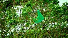 sac-bag-green-tree (bigvolpone) Tags: tree bag vent wind environment