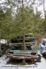 Plant a Tree (lyta1138) Tags: ontario rust rockwood mcleansautowreckers