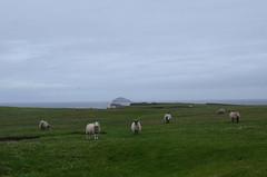 185_Eshaness (monika & manfred) Tags: nature landscape scotland wind walk hike mm shetlands coastalwalk eshaness shetlandislands shetlandisles holidays3
