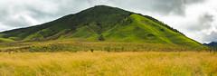 fields of gold (chocoorange) Tags: park mountain green grass indonesia landscape gold hills national savannah bromo semeru tengger eastjava