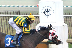 2016-01-08 (22) r1 Taylor Hole on #3 The Nattitude Way (JLeeFleenor) Tags: photos photography md marylandracing marylandhorseracing laurelpark sport sports jockey   jinete  dokej jocheu  jquei okej kilparatsastaja rennreiter fantino    jokey ngi horses thoroughbreds equine equestrian cheval cavalo cavallo cavall caballo pferd paard perd hevonen hest hestur cal kon konj beygir capall ceffyl cuddy yarraman faras alogo soos kuda uma pfeerd koin    hst     ko  bay winner outside outdoors maryland