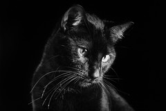 Gato (davidpineros.com) Tags: