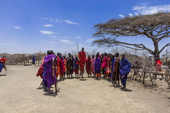 jump as high as you can (sixthofdecember) Tags: africa travel trees people tree men sunshine tanzania outside outdoors jump jumping sand nikon village dry sunny competition tamron acacia maasai eastafrica acacias maasaipeople maasaivillage tamron18270 nikond5100