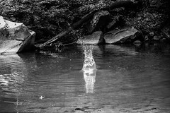 DSC_0084 (Astrikol) Tags: monochrome splash