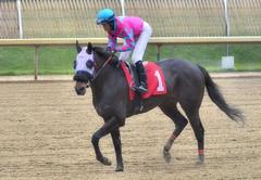 "2016-01-08 (44) r2 Victor Carrasco on ! (JLeeFleenor) Tags: photos photography md marylandracing marylandhorseracing jockey جُوكِي ""赛马骑师"" jinete ""競馬騎手"" dżokej jocheu คนขี่ม้าแข่ง jóquei žokej kilparatsastaja rennreiter fantino ""경마 기수"" жокей jokey người horses thoroughbreds equine equestrian cheval cavalo cavallo cavall caballo pferd paard perd hevonen hest hestur cal kon konj beygir capall ceffyl cuddy yarraman faras alogo soos kuda uma pfeerd koin حصان кон 马 häst άλογο סוס घोड़ा 馬 koń лошадь outside outdoors laurelpark maryland"
