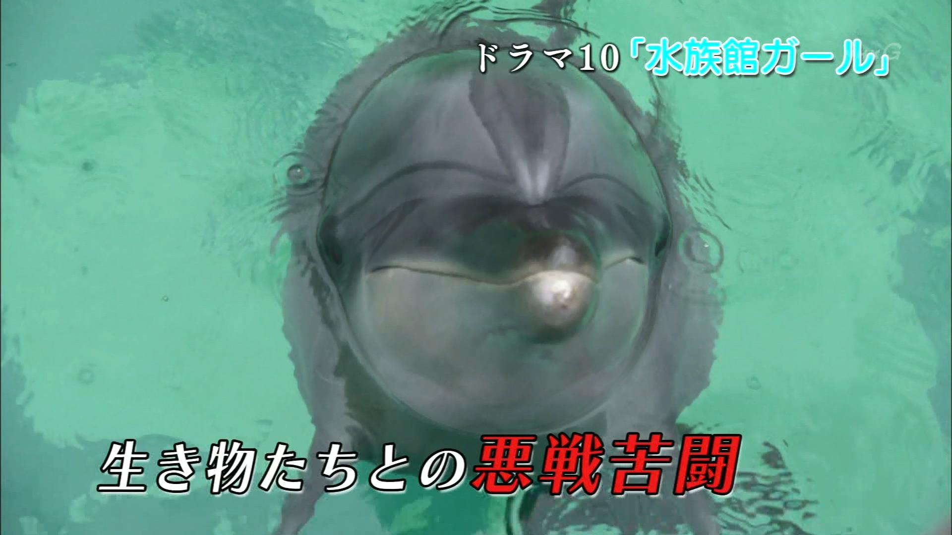 2016.06.17~ 「水族館ガール」IN - いきものがかり - ラストシーン(NHK).ts_20160617_220747.269