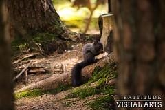 Little Squirrel (Flederkatze) Tags: wood cute nature beautiful animal fairytale austria sterreich woods squirrel little natur fantasy tyrol