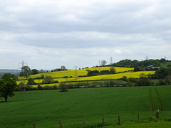 Rapeseed Fields(2) (JP Photography74) Tags: uk england nature yellow outdoors countryside farming fields rapeseed staffs
