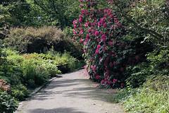 L1008751 (LaBonVampire) Tags: leica flowers nature zeiss carlzeiss zm leicam8 teletessart485 teletessar85