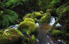 Toorongo River (Mark McLeod 80) Tags: green water forest focus rainforest rocks australia victoria vic noojee markmcleod leepolariser toorongoriver markmcleodphotography