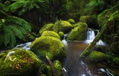 Toorongo River (Mark McLeod 80) Tags: green water forest focus rainforest rocks australia victoria vic noojee markmcleod leepolariser toorongoriver markmcleodphotography