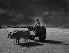 THE CONQUER OF MARS (aldogiraldo) Tags: mars junta conquer buey