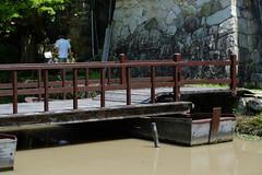 (Yorozuna / ) Tags: bridge japan canal ditch riverside aqueduct  riverbank moat channel waterway pontoon shiga omihachiman  pontoonbridge           hachimanbori   hachimanmoat pentaxautotakumar55mmf18 hachimanborimoat