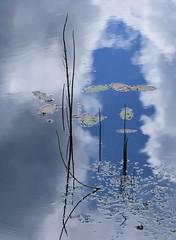 Still-life a la Japanese (:Linda:) Tags: sky cloud reflection germany pond village thuringia minimalism waterplant explored brden