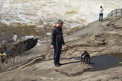 Hogsback Park in spring (2013) (lezumbalaberenjena) Tags: park dog chien ontario canada boston river back spring ottawa perro terrier bully parc chiot rideau hogsback hogs 2013 promavera