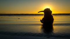 Sunset Kiwi (Kathrin & Stefan) Tags: ocean sunset newzealand sky beach nature silhouette backlight sand outdoor southisland tasmansea invercargill foveauxstrait oretibeach