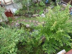 Garden next door (Stop carbon pollution) Tags: fb flickr japan 日本 kantou 関東