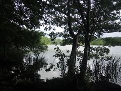 Am Kleinen See, Lbeck , NGIDn755496948 (naturgucker.de) Tags: lbeck kleinersee naturguckerde cwolfgangkatz ngidn755496948