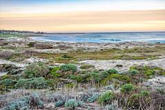 Asilomar Sunrise (luqmac) Tags: 17miledrive pacificcoast californiacoast asilomarstatebeach asilomarconferencecenter nikond300
